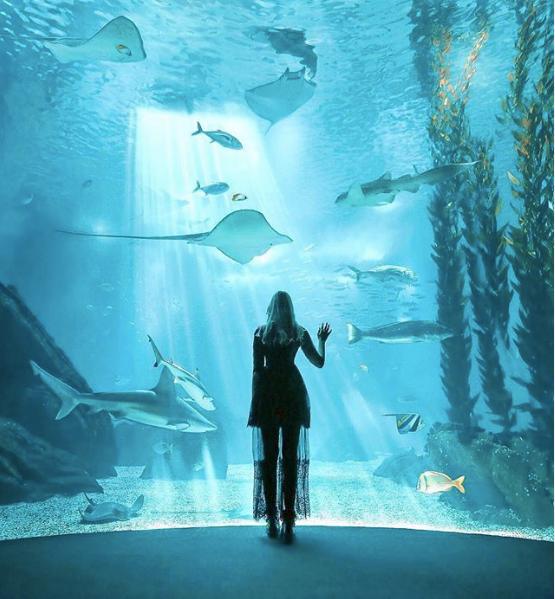 Visiter Aquarium Lisbonne - Voyage à Lisbonne Blog