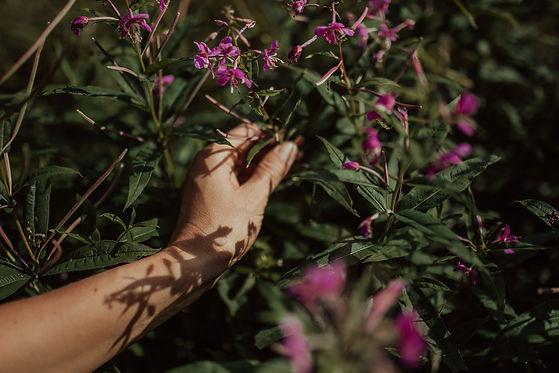hand-picked herbs_plukttea.jpg