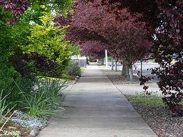 Sidewalk red tree 1.JPG