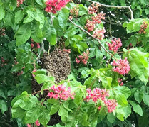 Another bee swarm