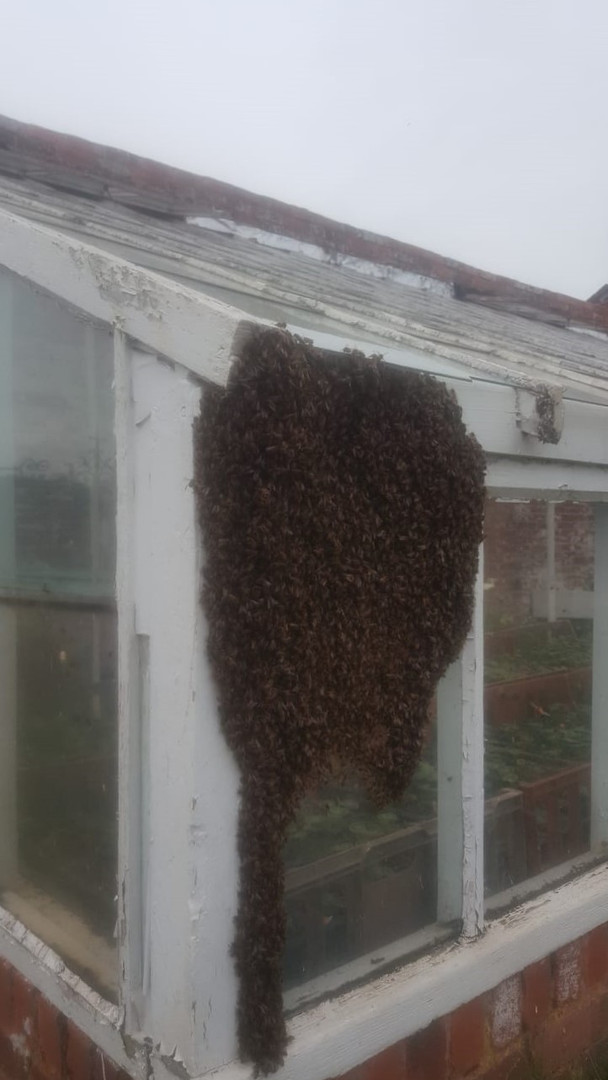...and another swarm