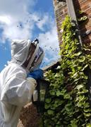 Hive survey