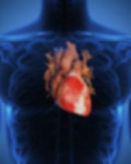 cardiologyd.jpg