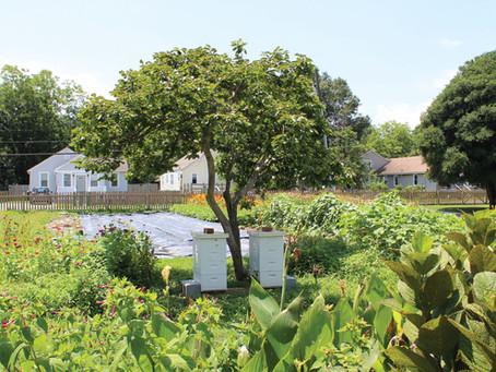 Local Farm Spotlight: Honeysuckle Sweet Farm