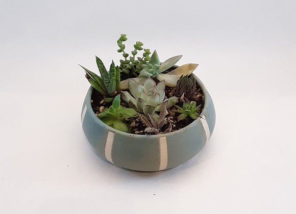 dusty blue planter with succulents