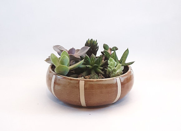 cinnamon planter with succulents