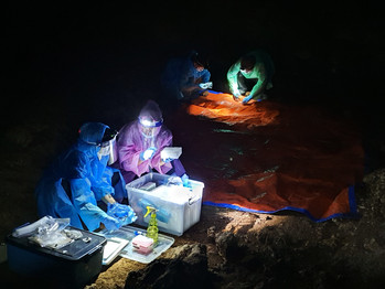 Into a Cave: Enhancing Surveillance in Malaysia
