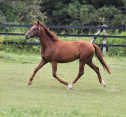 Don Frederico filly out of Cindy