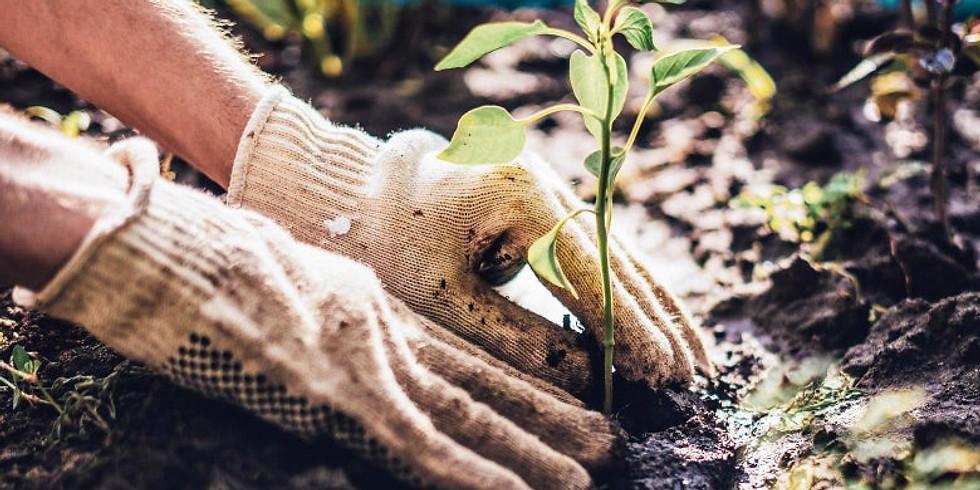 Wilshire Park Tree Planting