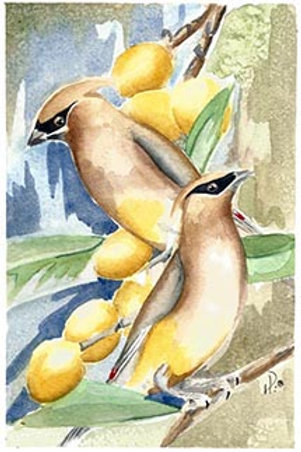 Waxwings and Loquats
