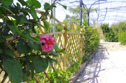 Ht-Garden-ngoai-canh-06