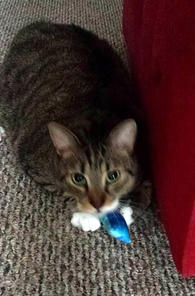 Paddy with Catnip Pouch