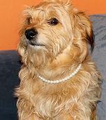 pearl collar1.jpg