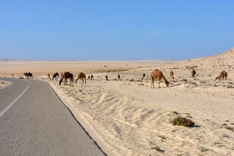 19.01. - 21.01.18 Sanddünen der Westsahara und die Wüste Mauretaniens