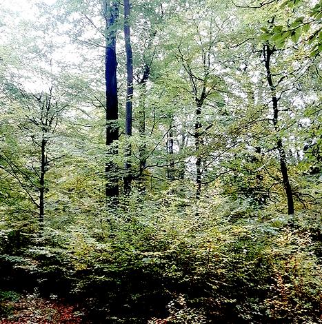 3.5Buchenwald.png