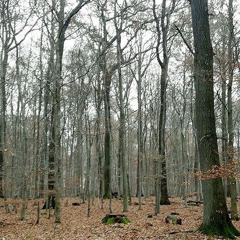 3.5-buchenwald.jpg