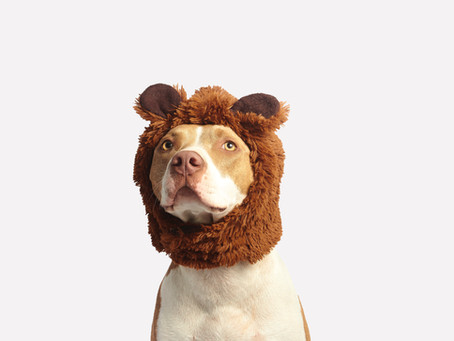 Top 5 Tips: Do's and don'ts for your pet's Halloween safety