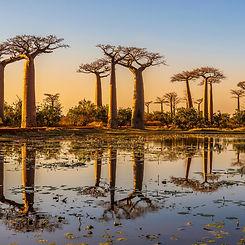 baobabtree_edited.jpg