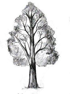 Tree9v2.jpg