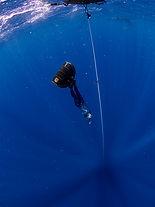 fredivehq,fdhq,molchanovs,freediving.JPG