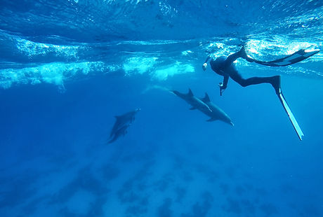immersion avec les dauphins, bluexperience, freediving