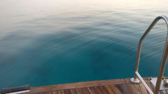 bluexperience, plongée en apnée, Mer Rouge, immersion avec les dauphins