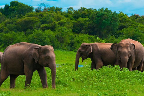 Bluexperience, éléphant, yoga