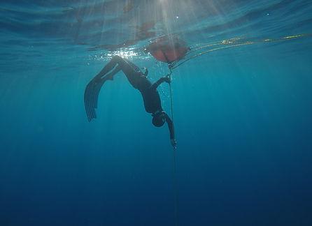 bluexperience,stage plongee en apnee,freediving,mer,bateau, nage avec dauphins