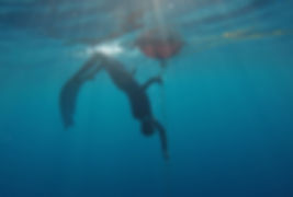 Bluexperience,Freediving,RAID,WSF,plonge