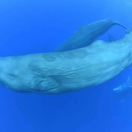 Retour sur notre voyage au Sri Lanka à la rencontre des baleines bleue et des cachalots Avril 2018