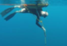 Bluexperience,Freediving,RAID,WSF.jpg