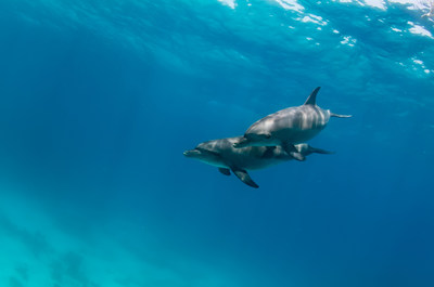 Bluexperience Freediving, molchanovs, sw