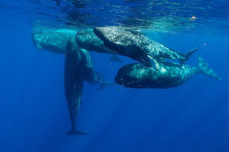 BluexperienceFreedivingRAIDWSFswimming w