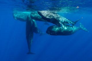 Bluexperience,Freediving,RAID,WSF,swimmiBluexperience,Freediving,apnea,apnée,mol
