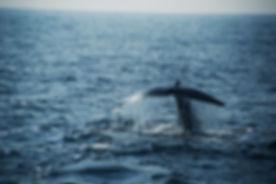 Bluexperience,Freediving,RAID WSF,baleines bleues