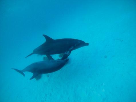 Bluexperience,Freediving,Molchanovs,swim