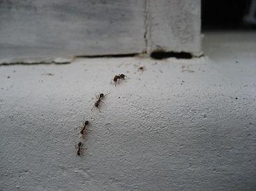 ants in house.jpg