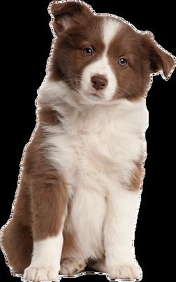 33728-6-puppy-transparent-image.png