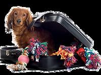 walizka psa