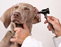 Profilaktyka u psów