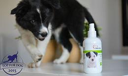 Zuri testuje Over Zoo- Urine Free Dog