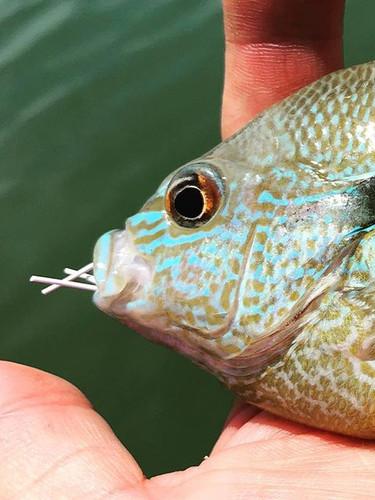 That blue... #txflyfishing #southllanori