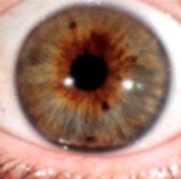 Iris gros plan pour iridologie