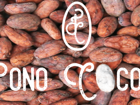 We've Launched Pono Cocoa Afore Halloween for Ethical Shoppers