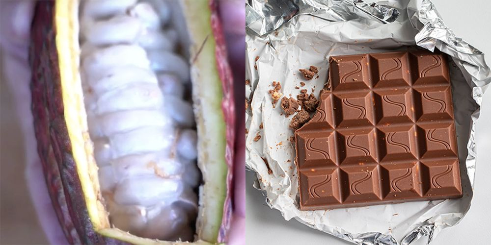 An open cacao pod and an open chocolate bar