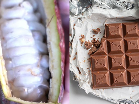 What does cacao fruit taste like?