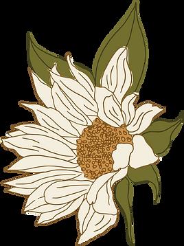 Asset 8sunflowers.png
