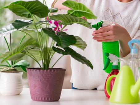 The Advantages of Native Plants