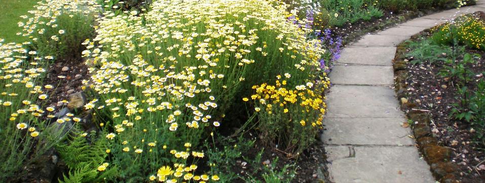 Garden 2.png
