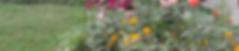 Garden 1.png